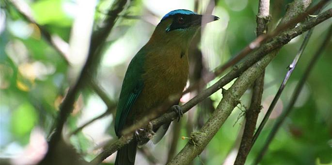 Montes de Oro Protected Zone
