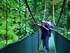 Canopy_Bridges